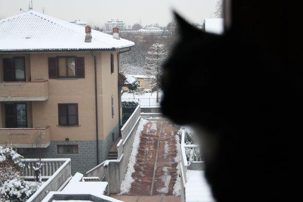 La neve e il gatto