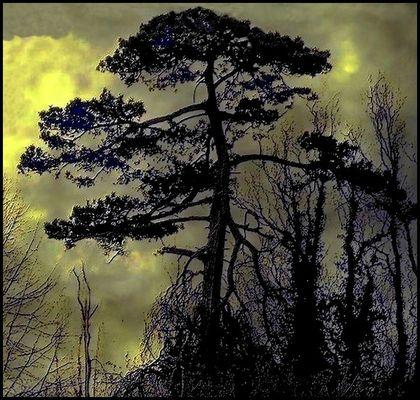 La nuit de l'arbre