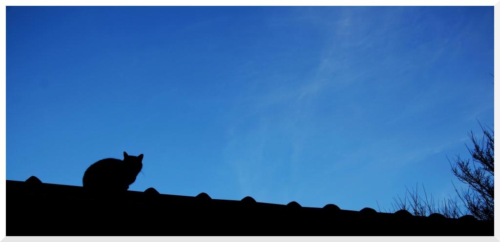 la nuit tout les chats...