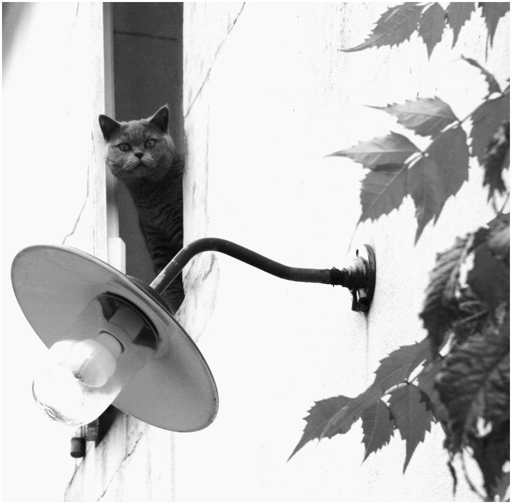 """"""" la nuit tout les chats sont gris, mais certains... aussi le jour"""""""