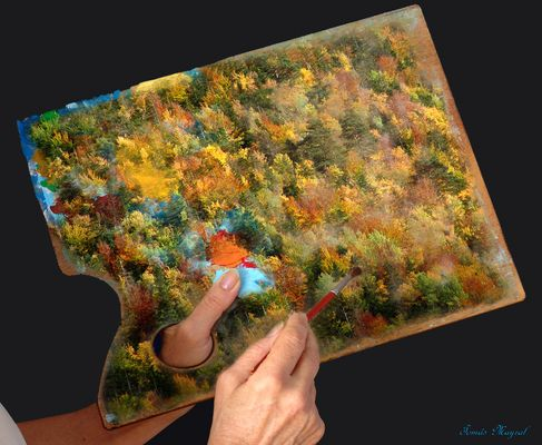 La Paleta del Bosque