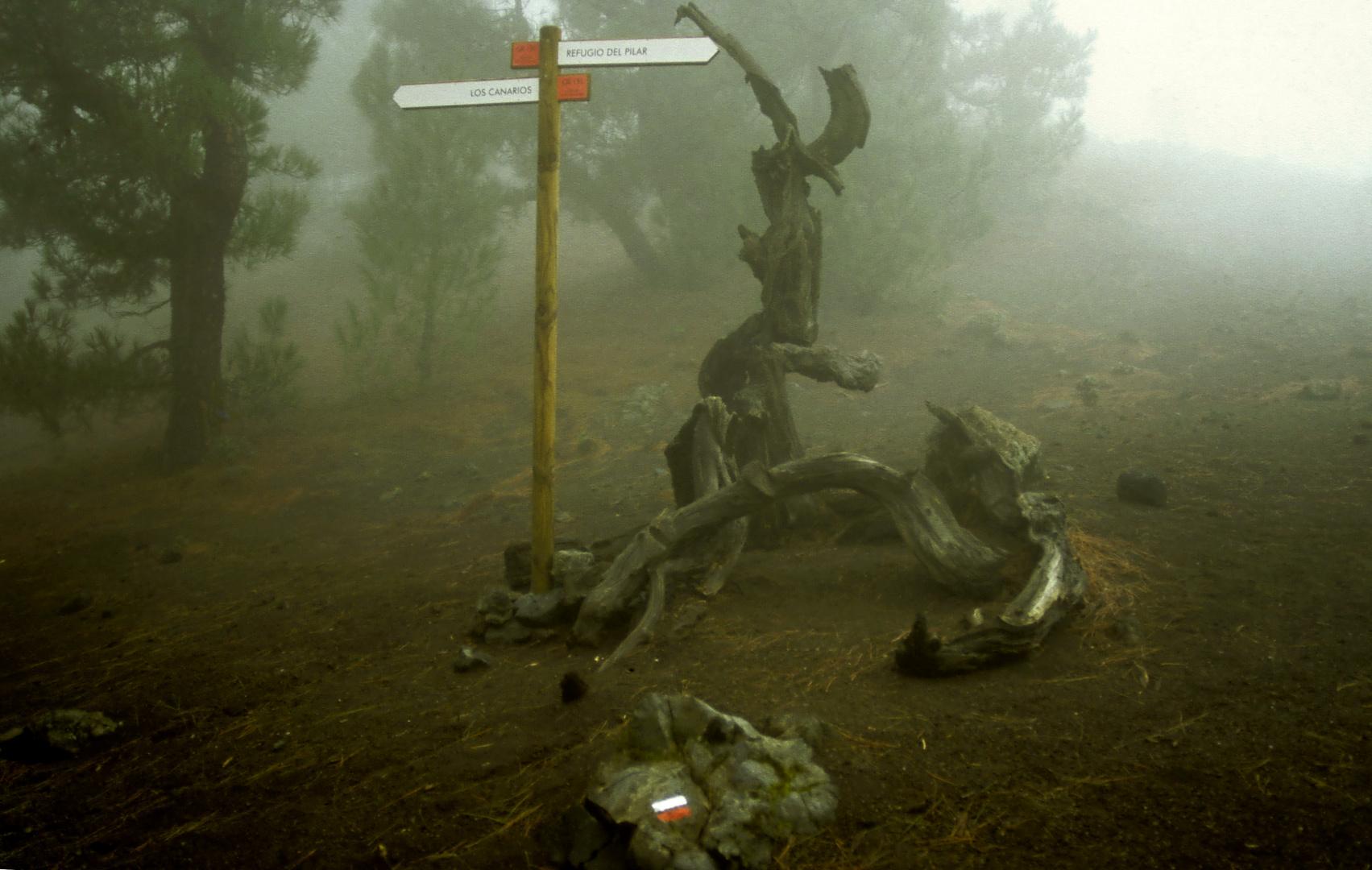 La Palma - Geisterwald im Refugio El Pilar