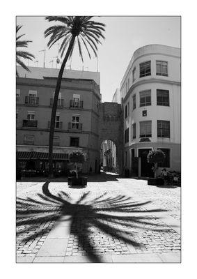 la palmera de Cádiz
