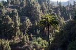 la palmera solitaria (die einsame Palme) (1)