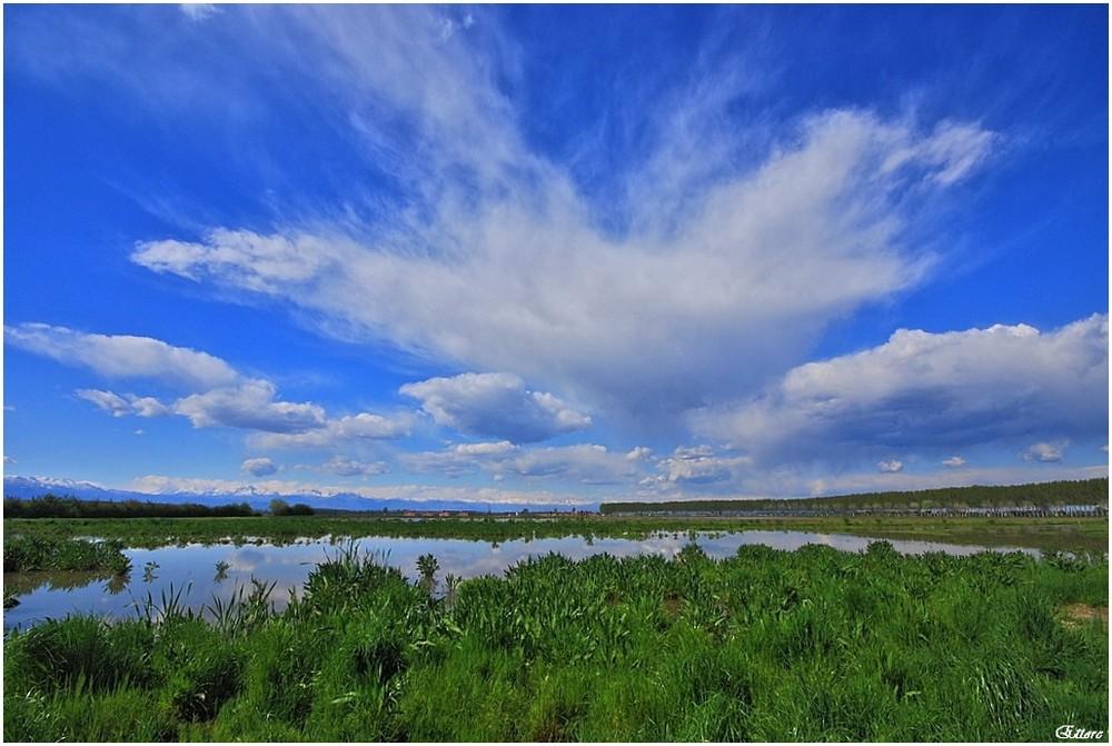 La palude attorno all'oasi Lipu di Racconigi