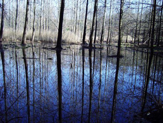 LA PALUDE nel parco del lago grande di A vigliana