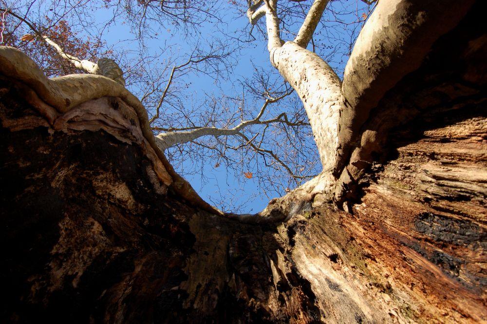 ...la pancia dell albero..