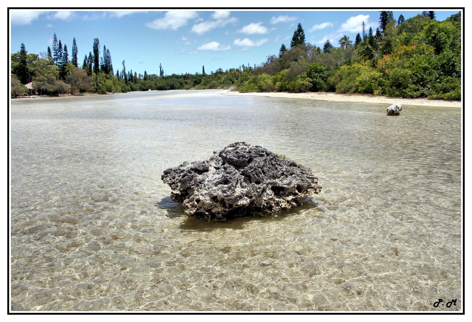 la patate de corail