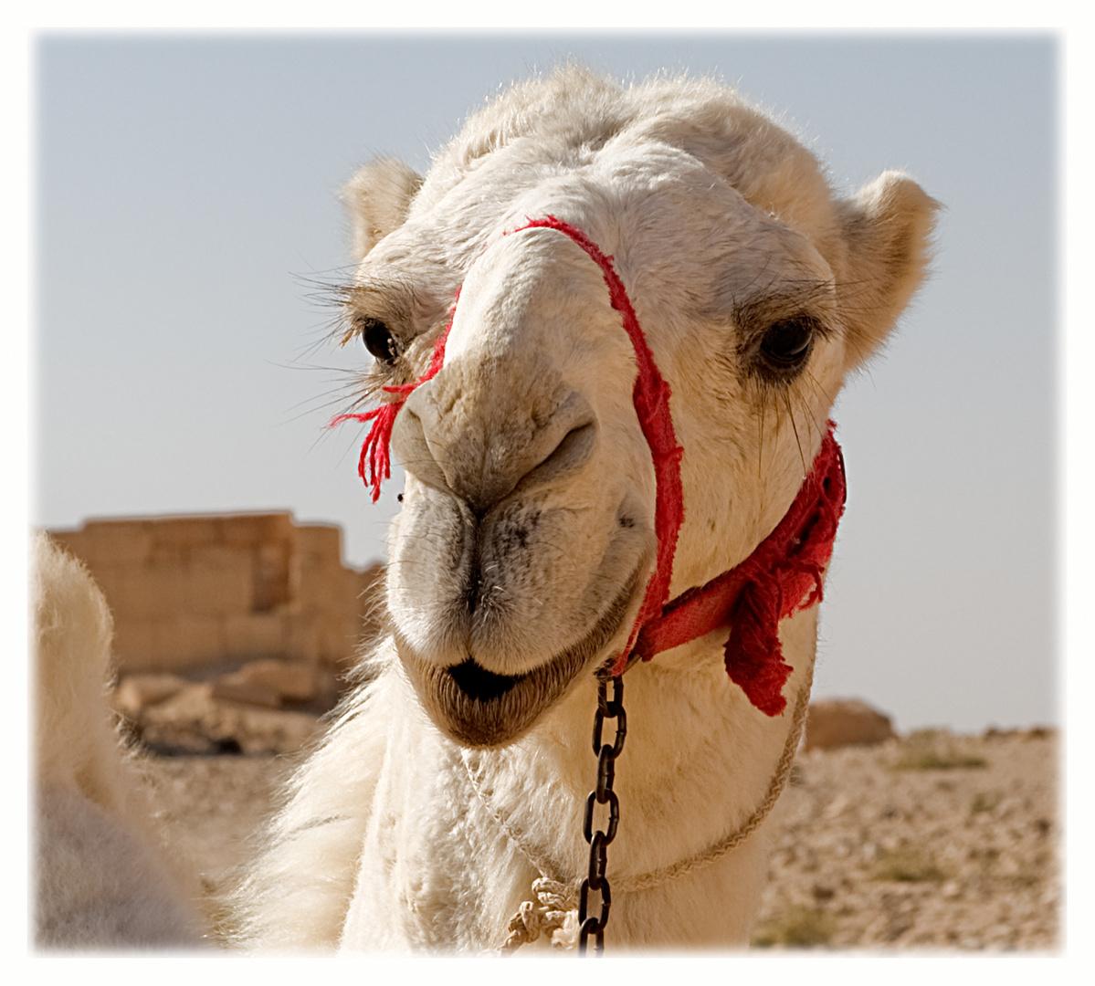 La pause (Kamel standby)