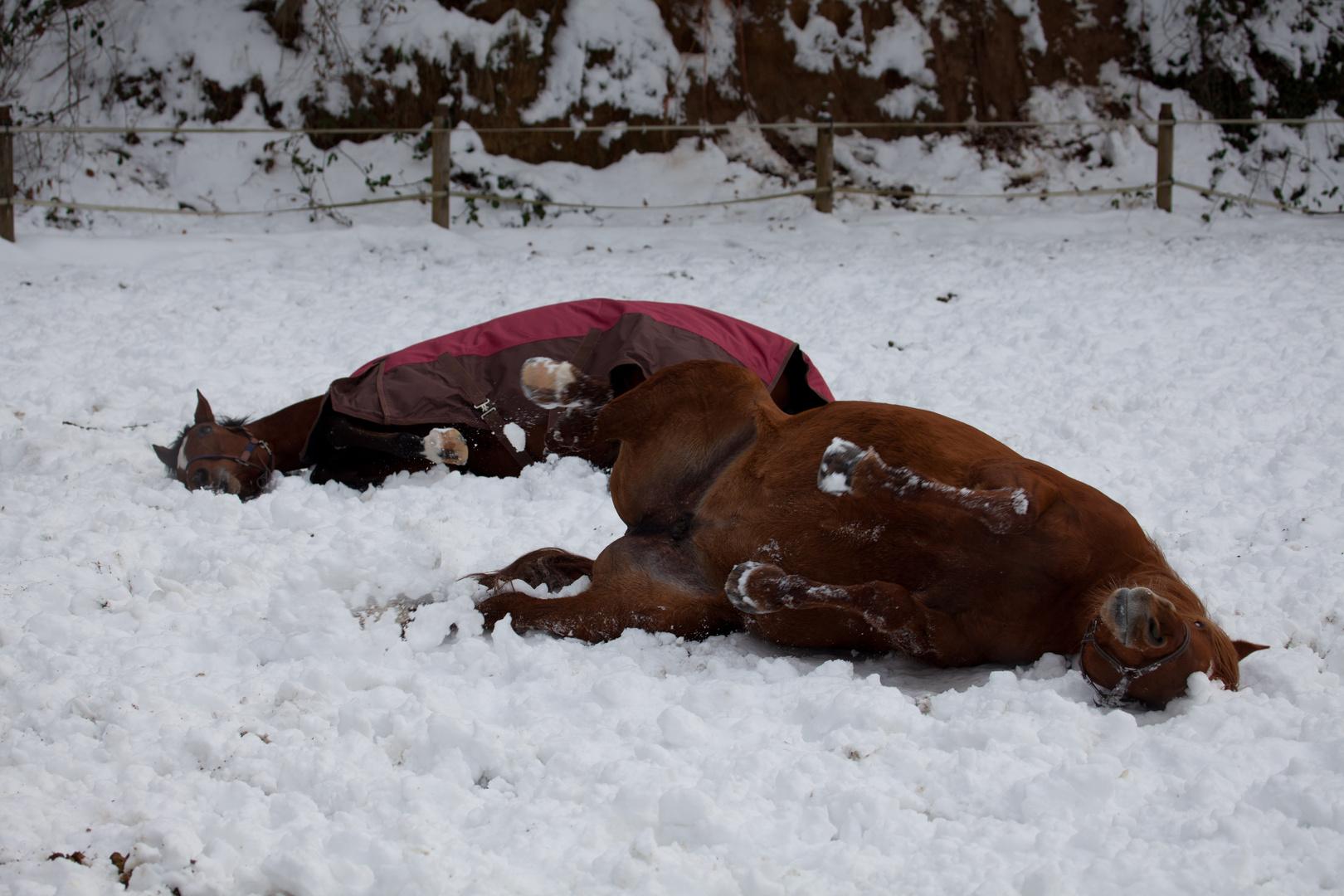 La Perla und Casey im Schnee