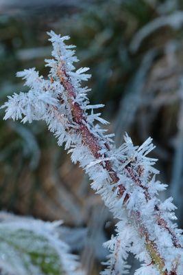 la petite branche de cristaux