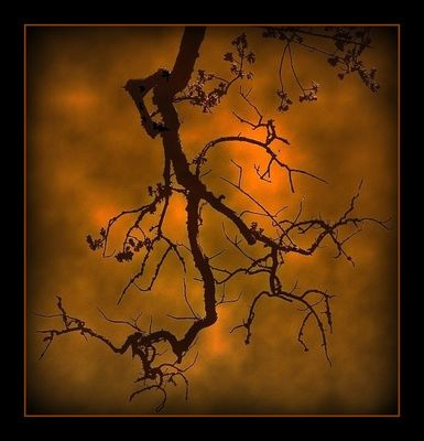La petite branche