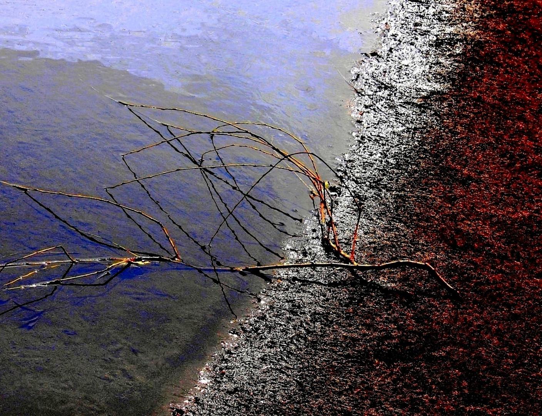 La petite branche perdue