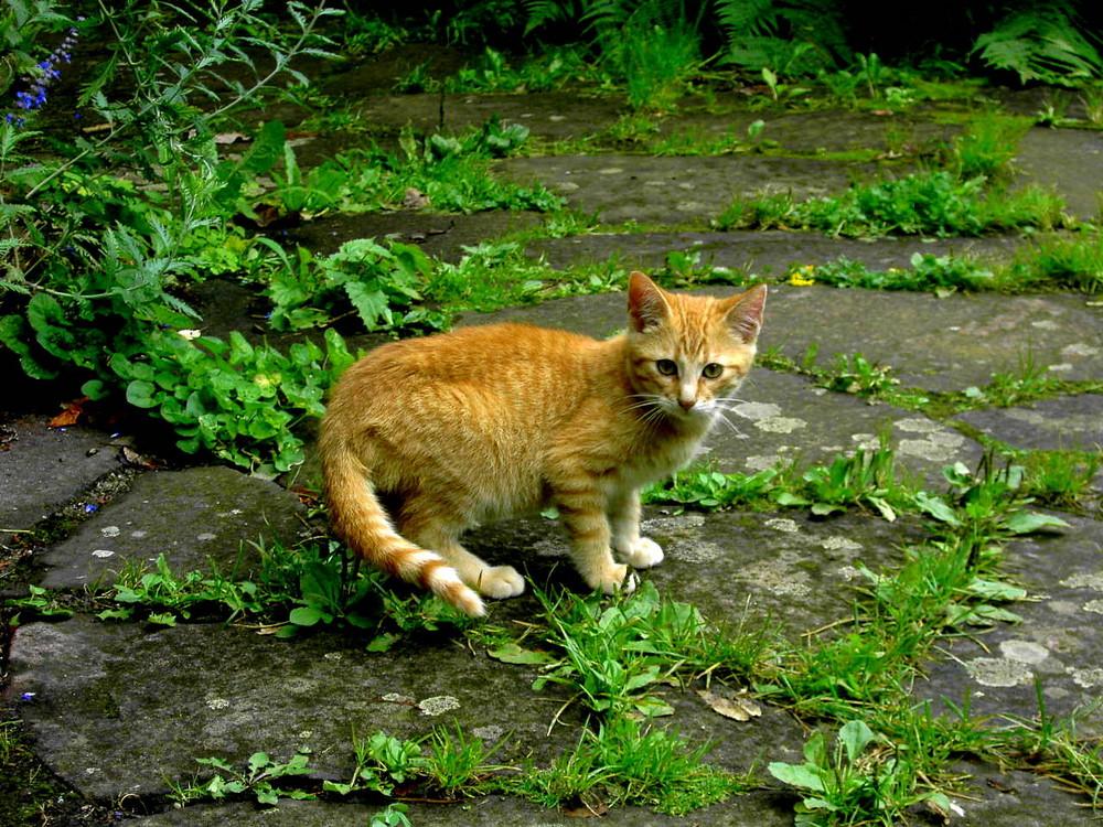 la petite chat