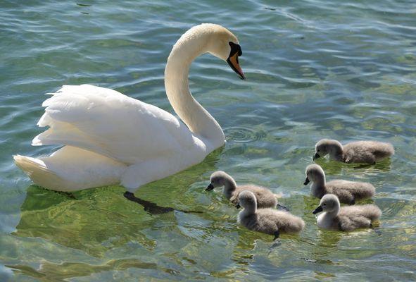 La petite famille en balade