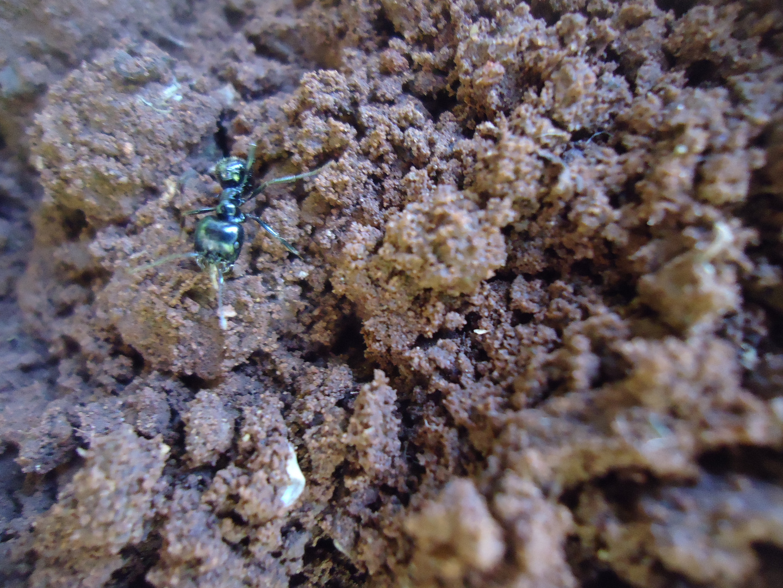 La petite fourmie