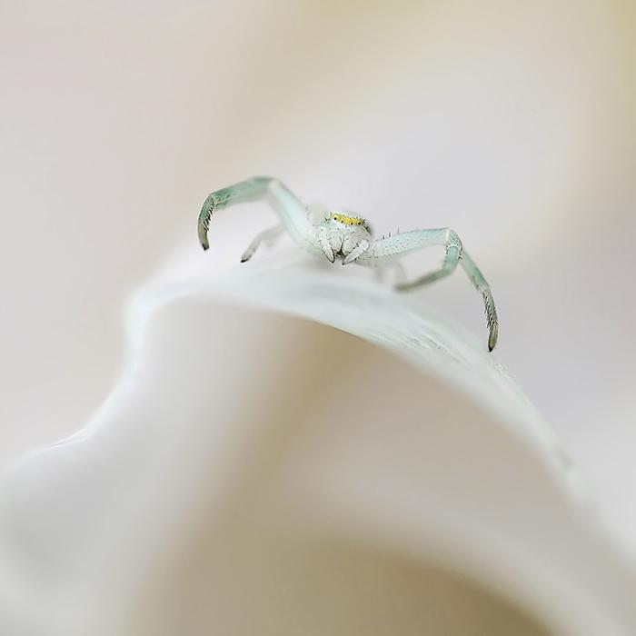 La petite mariée