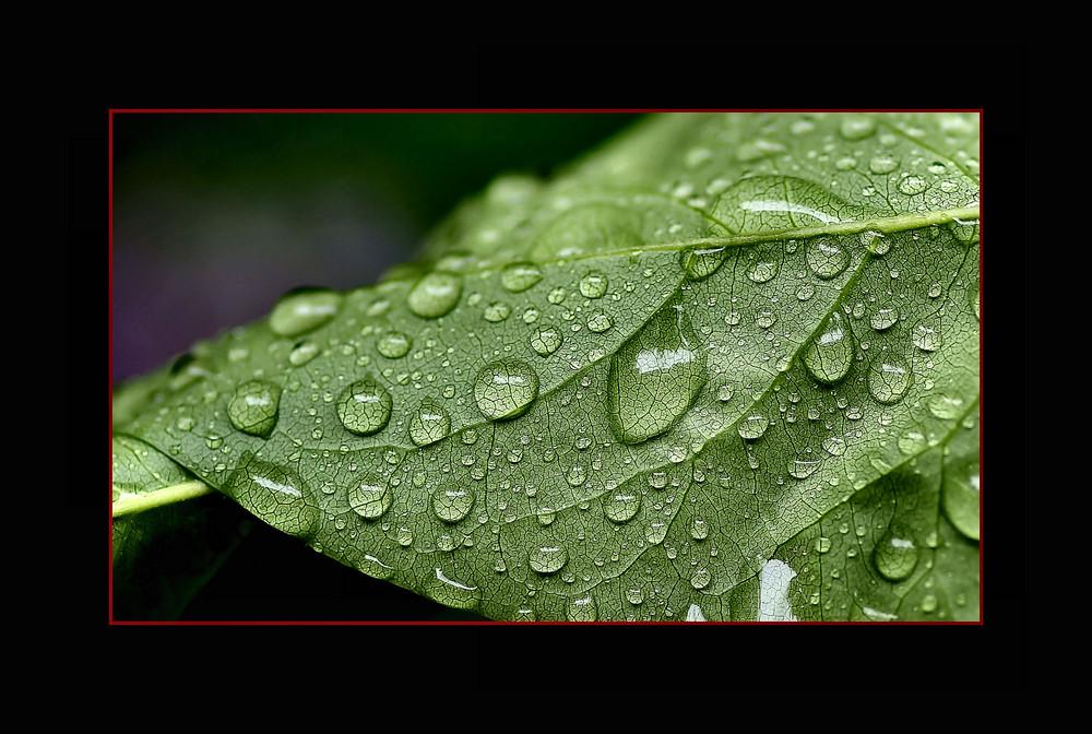 La pioggia e' cessata....
