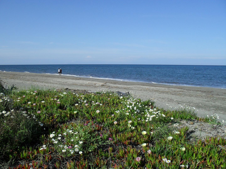 La plage de mariana (Haute Corse)