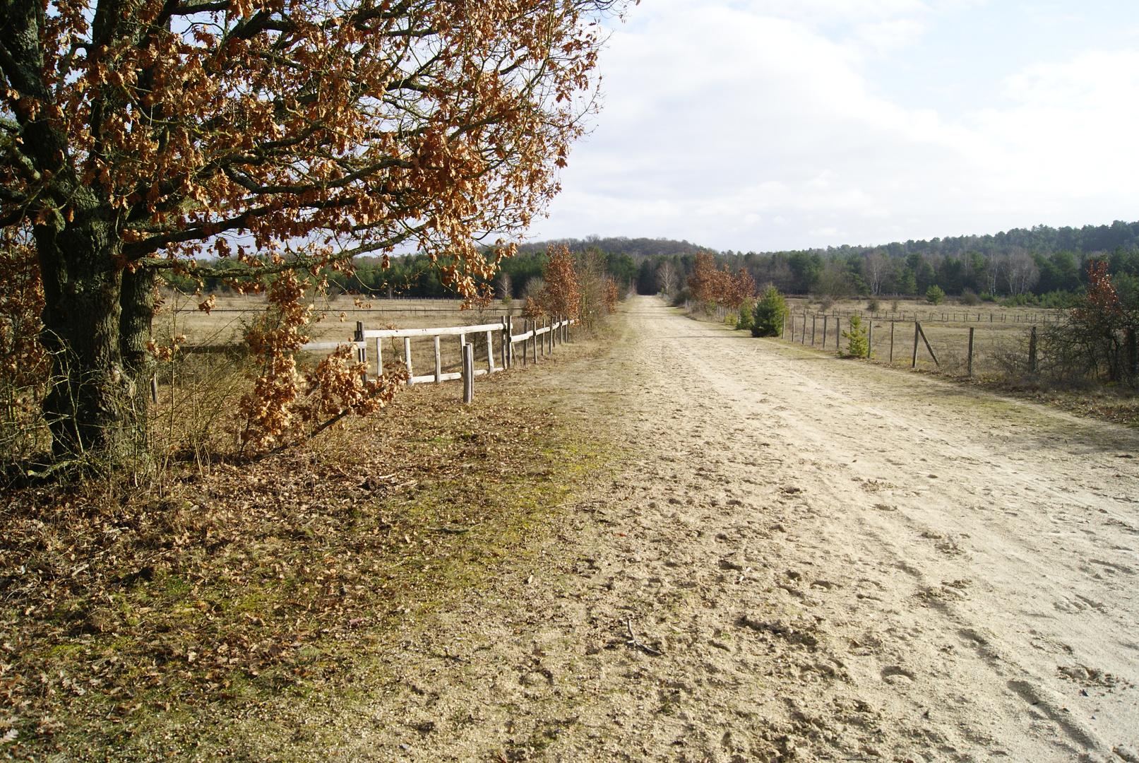 La plaine de Chanfroy, forêt de Fontainebleau