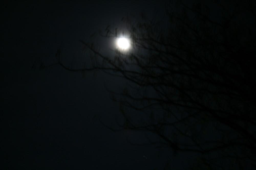 la pleine lune(pas vraiment top mais j'aime les ombres de l'arbre)