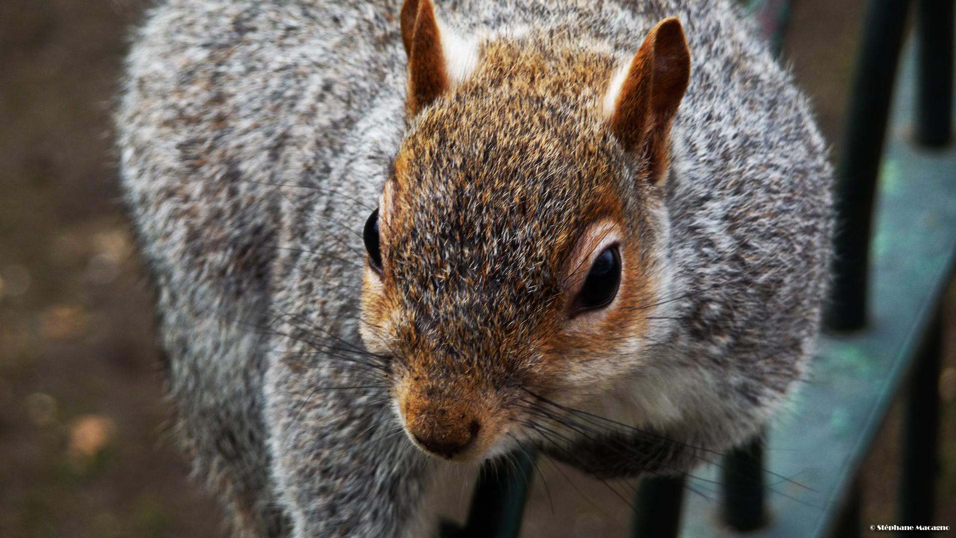 La pose de l'écureuil