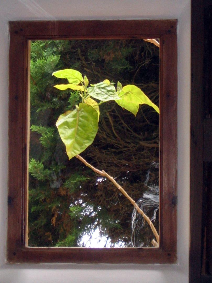 La primavera asoma por la ventana