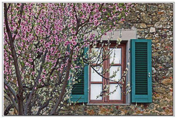 la primavera bussa alla finestra....