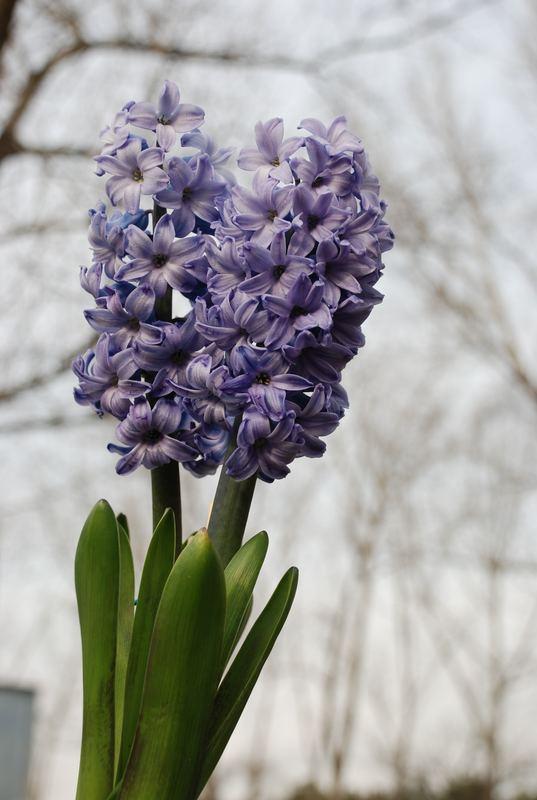"""¡La """"primavera"""" del topo de modo visto!"""