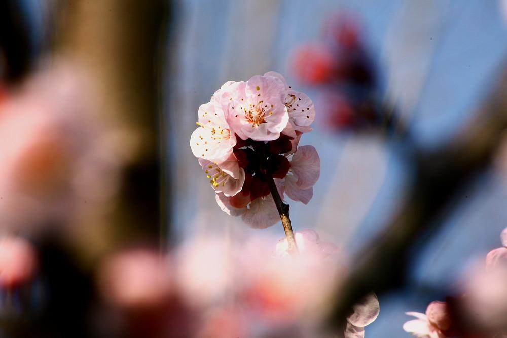 la primavera tra i rami