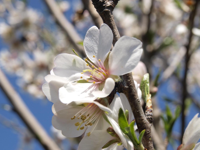 la primavera yego