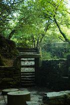 La puerta del bosque