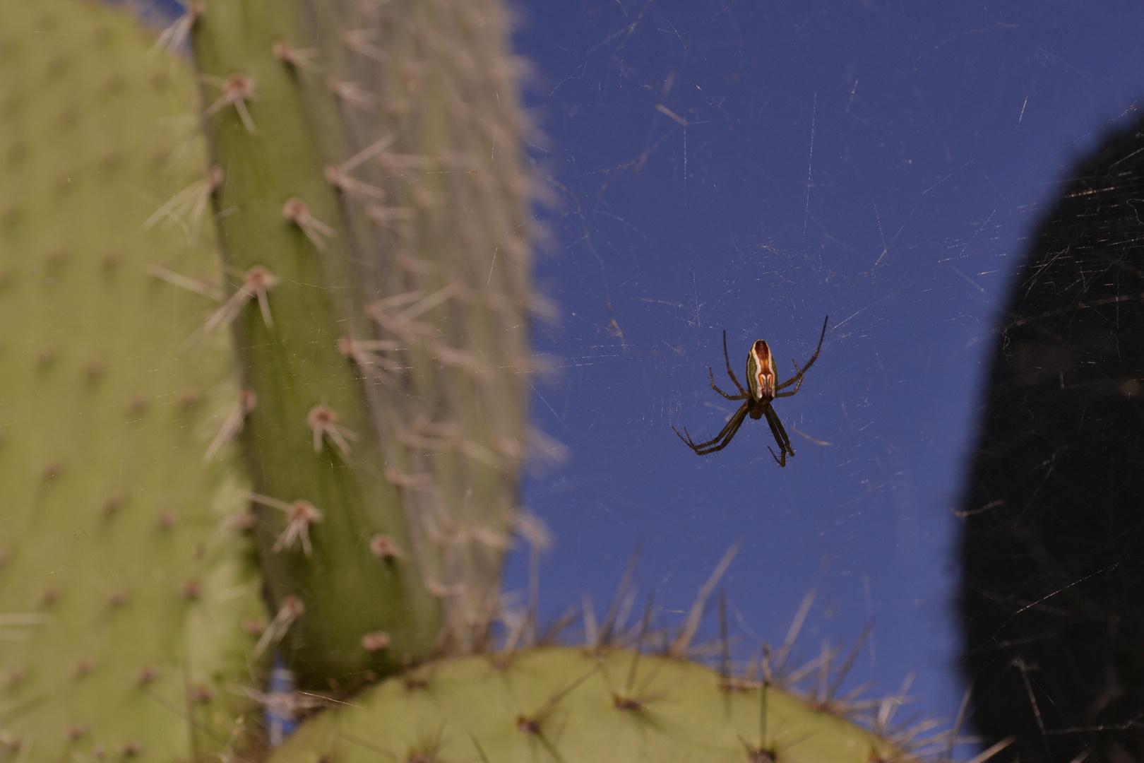 LA que te engaña, esta vez no es la araña.