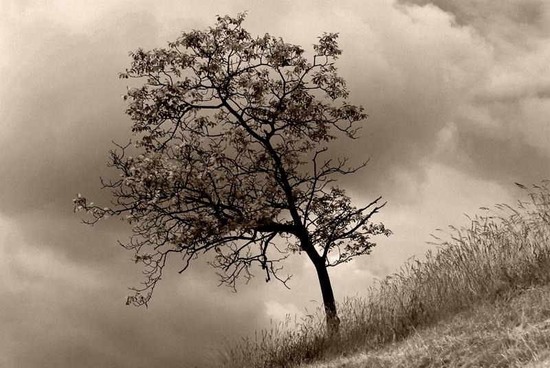 ...la quiete prima della tempesta