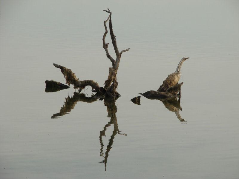 la racine et l'oiseau