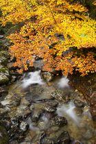 La rama que mece ...el rio
