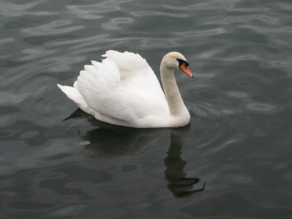la reine sur l'eau