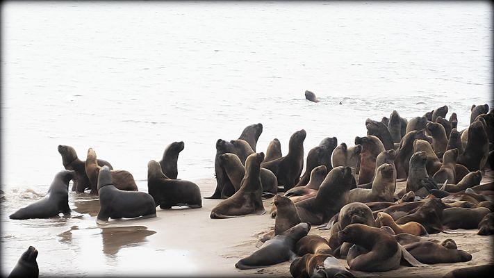 La reserva de lobos marinos I