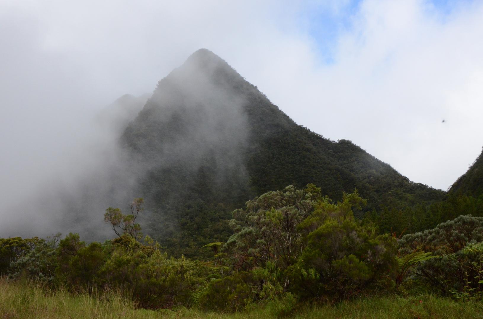 La Réunion - Bergkegel am Foret de Bebour im Nebel