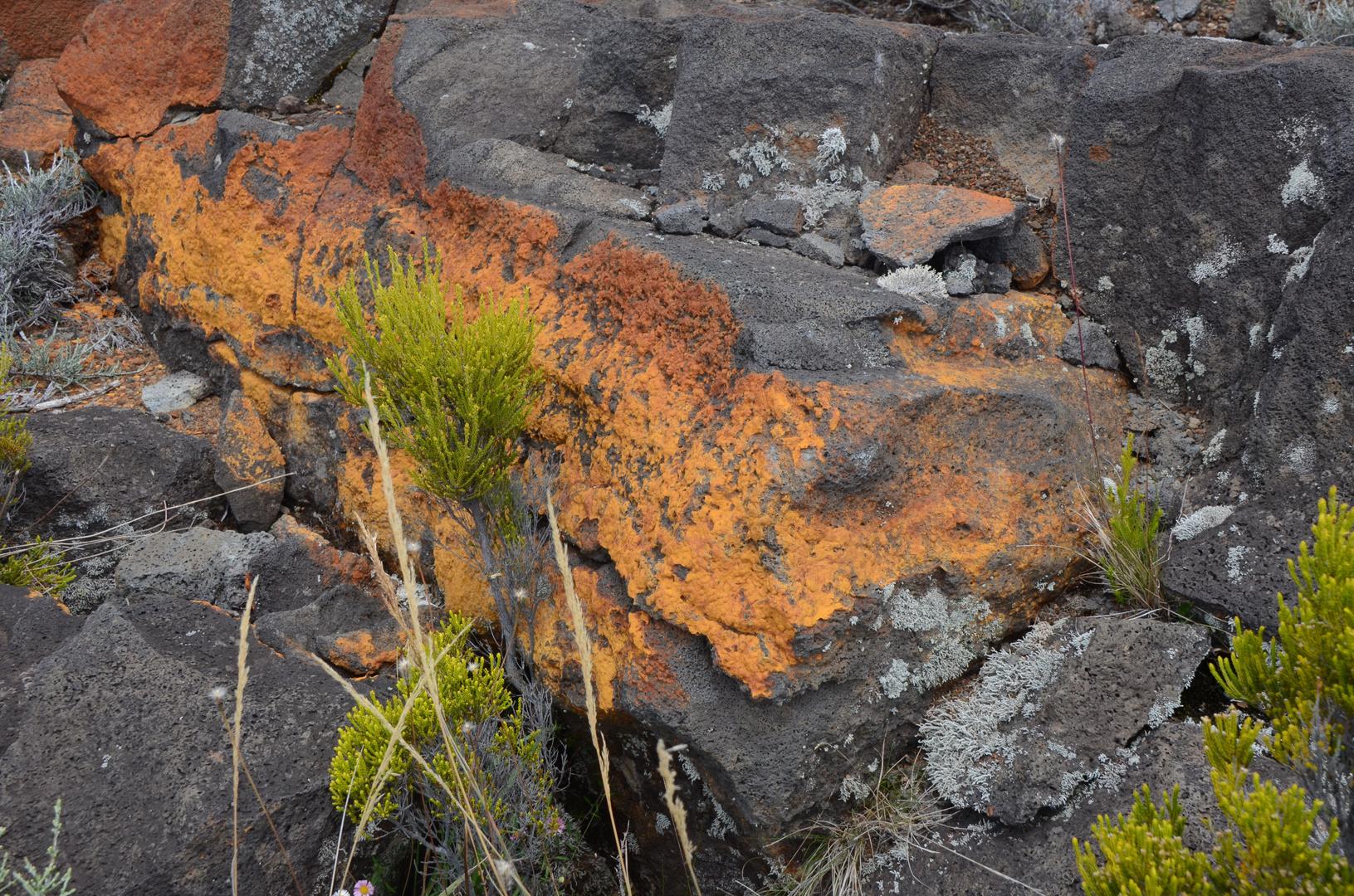 La Réunion - Eisenausblühung an einem Basaltblock
