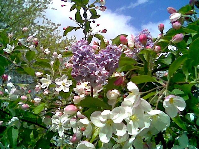 La ricca primavera