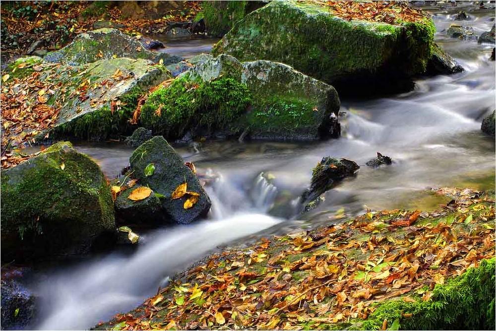 La riviere 2