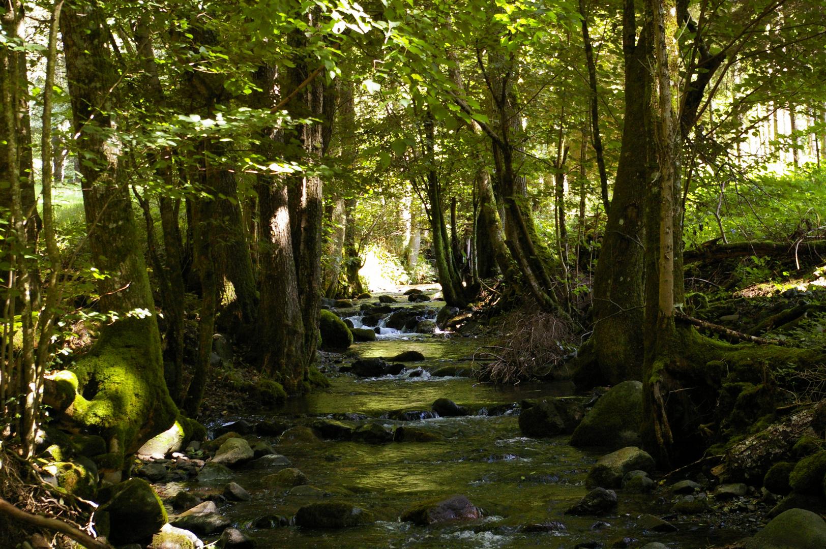 La rivière sous les bois