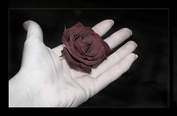 [la rosa]