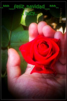 la rosa de lucy