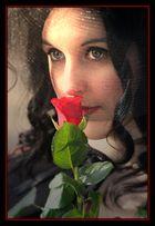 la Rosa più bella II