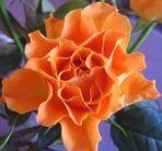 La Rose-