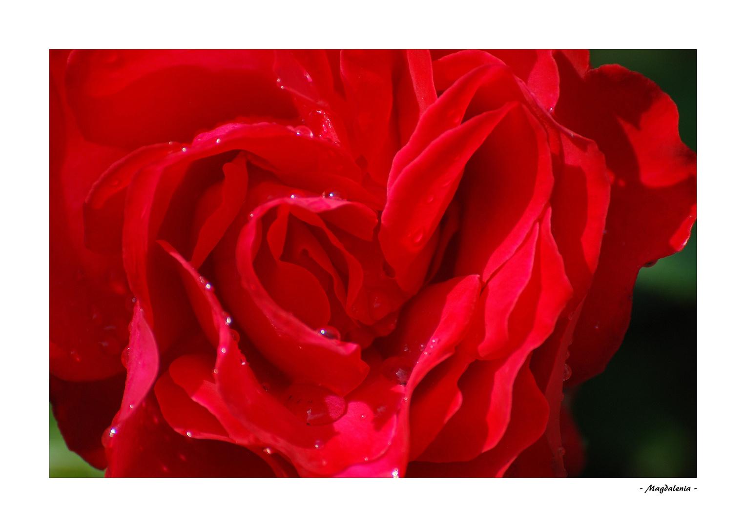 La rose et les perles
