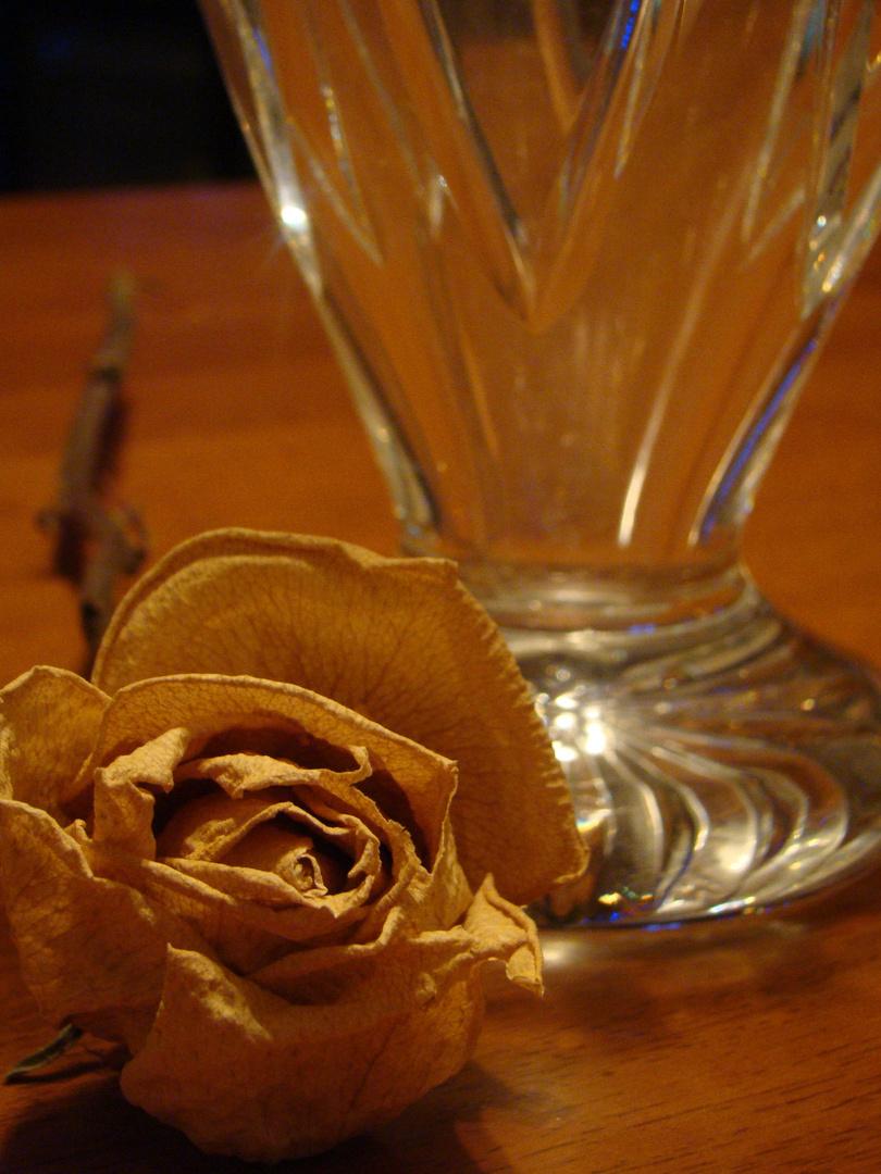 La rose vieilli