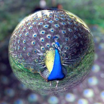 La roue dans la bulle